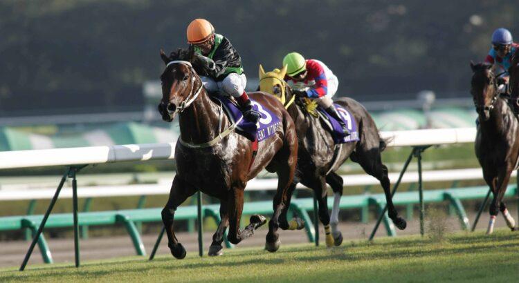 Casinoper At Yarışı
